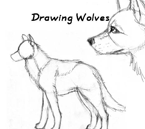 465x415 Wolf Tutorial By Blayrd