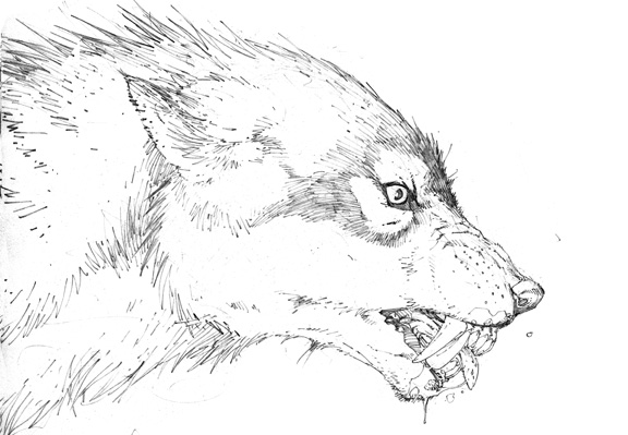 576x399 Creepy Coloring Pages Of Wolves Realistic Coloring Pages Of Wolves