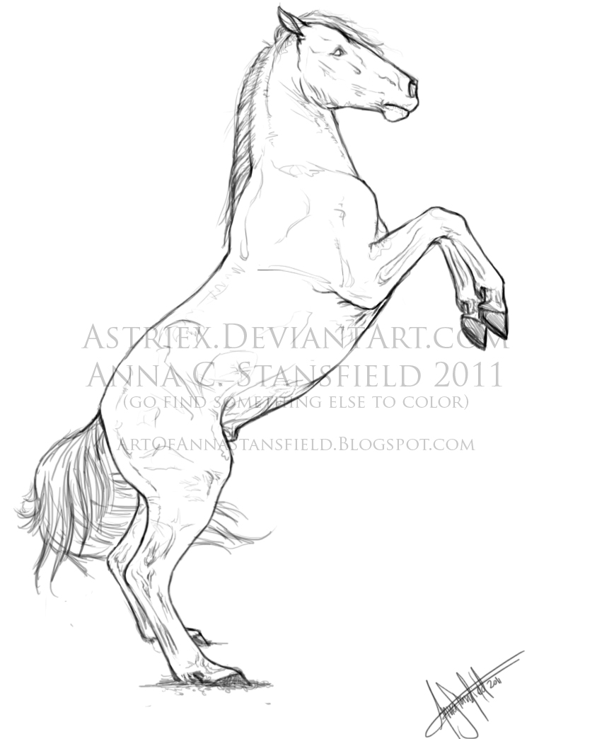 Rearing Horse Drawing at GetDrawings.com | Free for personal use ...