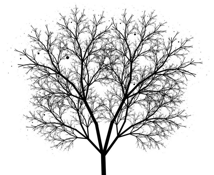 736x602 Fractal Tree. You Can Draw Something Really Beautiful From Those