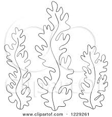 220x229 Image Result For Seaweed Drawing Inspiration