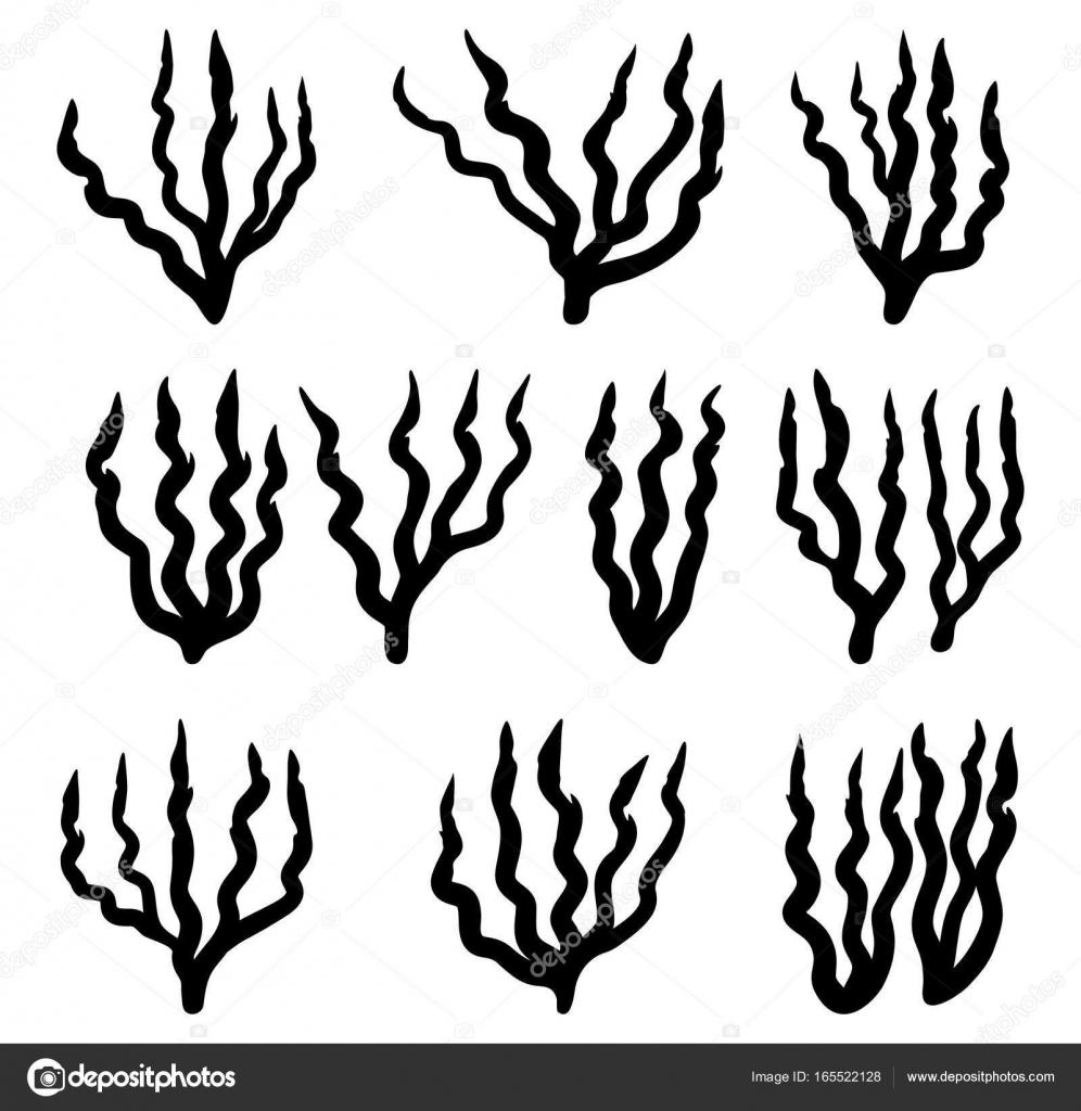 Red Algae Drawing At Free For Personal Use Back Gt Gallery Simple Plant Cell Diagram With Labels Kids 996x1024 Silhouette Vector Symbol Icon Design Beautiful Illust