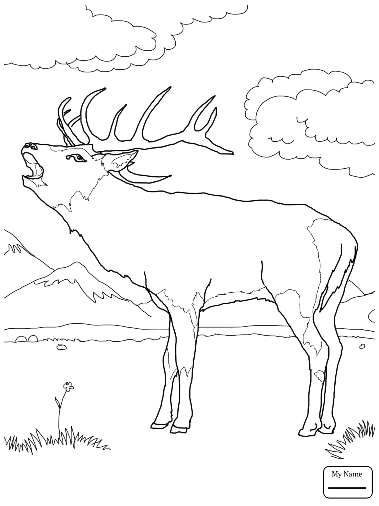 1224x1632 Coloring Coloring Pages Deer
