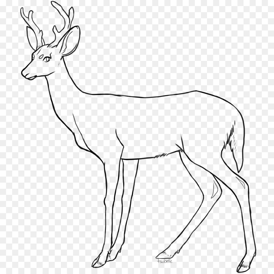 900x900 Red Deer Drawing Coloring Book Clip Art
