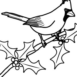 268x268 Cardinal Coloring Page Discovery Kids Red Cardinal Coloring Page