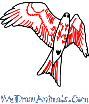 300x350 How To Draw A Red Kite