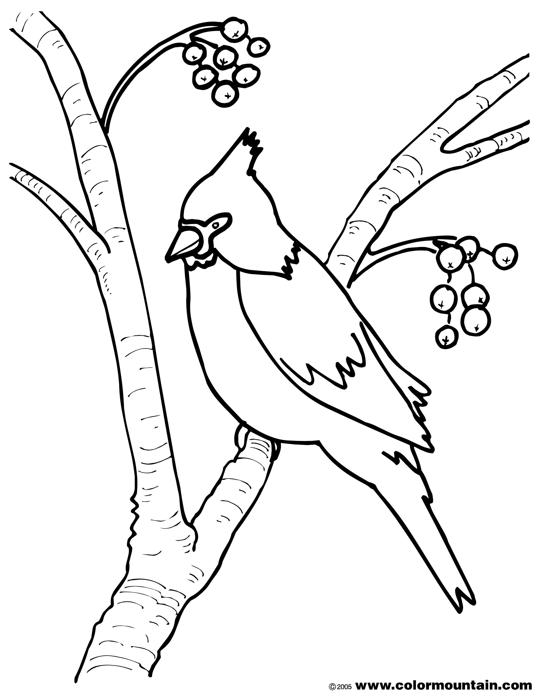 1800x2329 Red Male Cardinal Coloring Page Adult Humor Pages