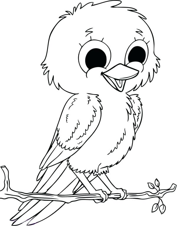 600x765 Robin Bird Coloring Pages Red Robin Bird Coloring Pages