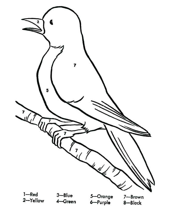 670x820 Robin Bird Coloring Pages Robin Bird Drawing Coloring Page