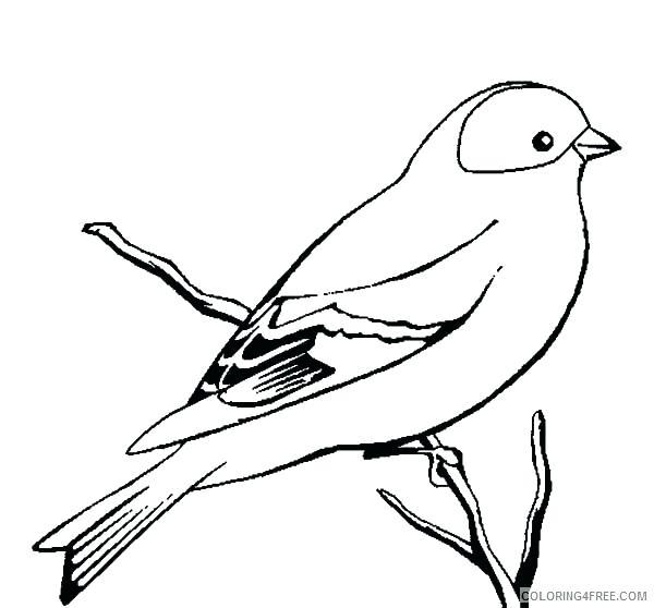 600x558 Cardinal Bird Coloring Page Cardinal Coloring Pages Drawing