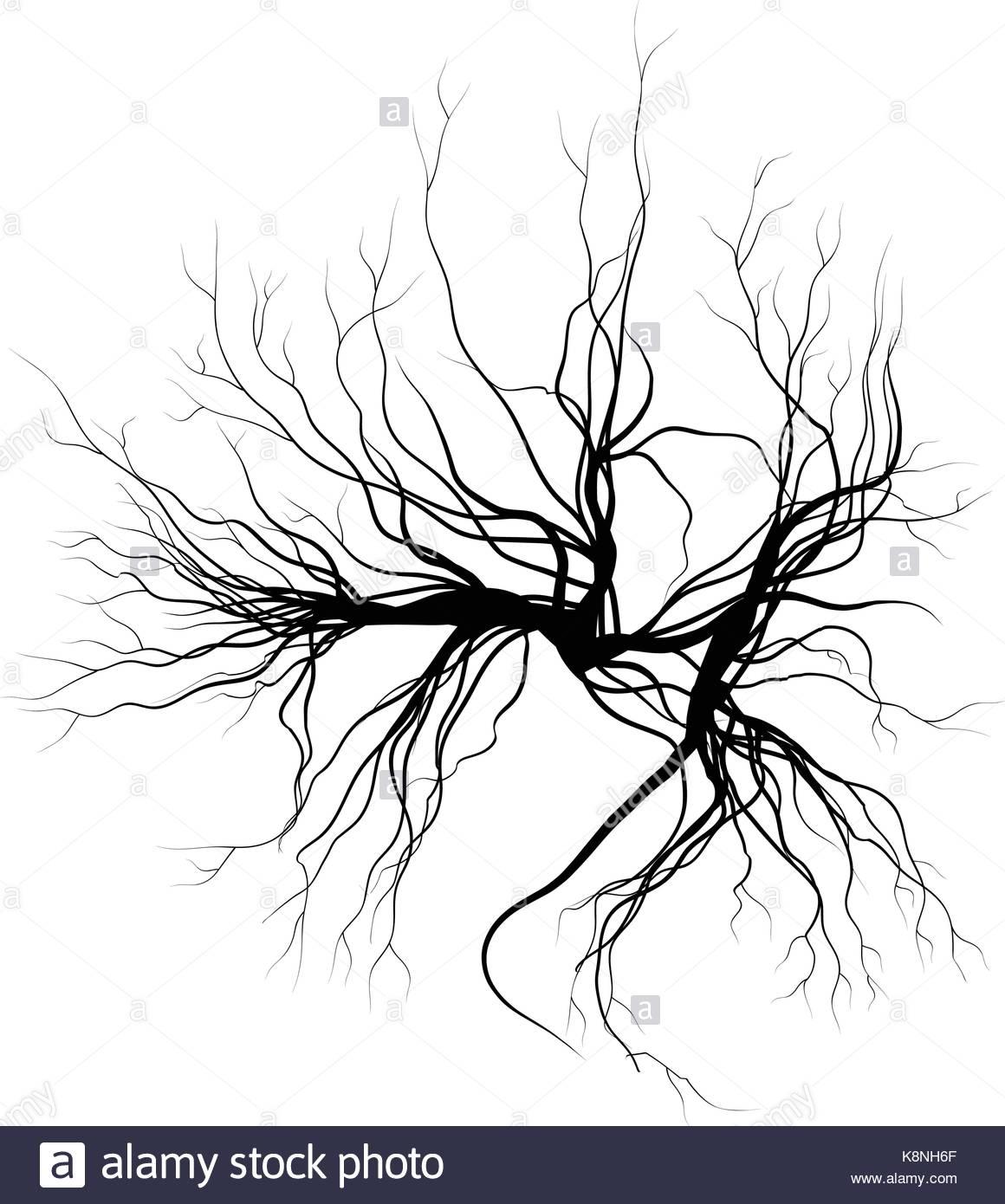 1160x1390 Human Veins, Red Blood Vessels Design. Vector Illustration