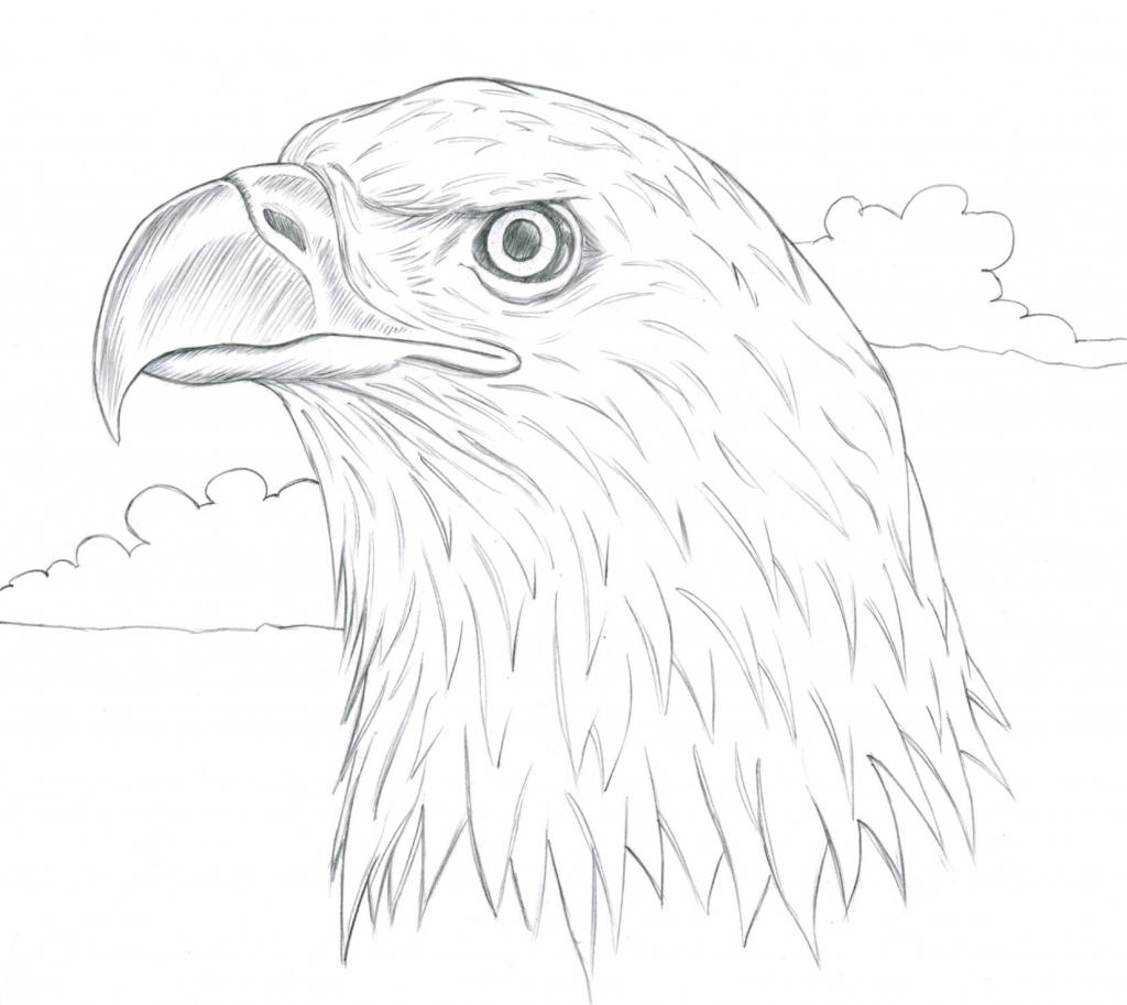1024x913 Drawing Of A Bird How To Draw A Red Bird Red Cardinal Bird Step