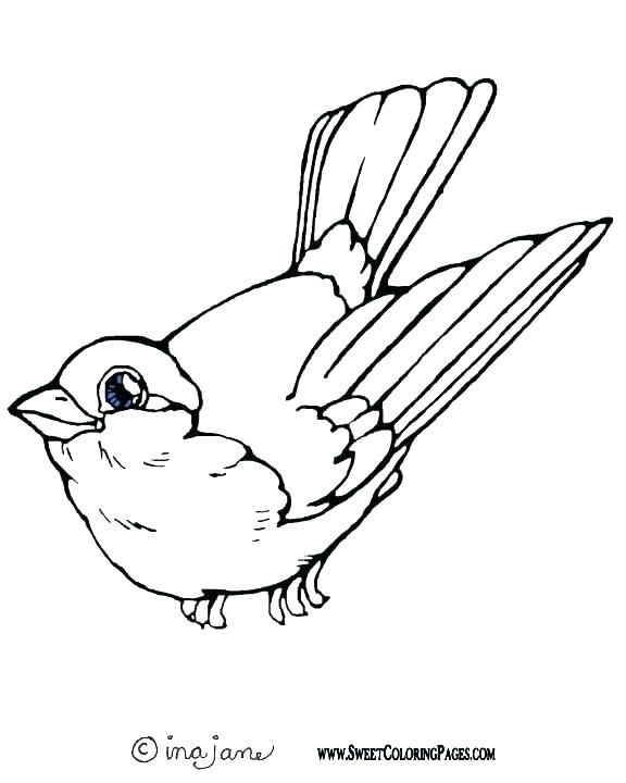 576x720 Robin Bird Coloring Pages Bird Coloring Pages Plus Drawing Robin