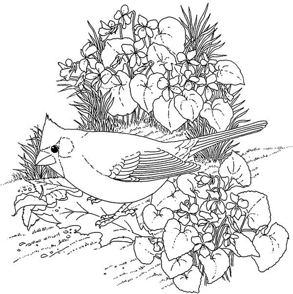 red bird coloring pages - photo#36