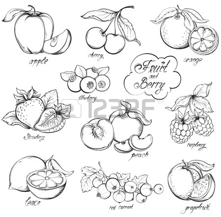 450x441 Raspberry Drawing Stock Photos. Royalty Free Business Images
