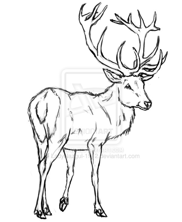 600x732 Red Stag Deer Drawing Sketch Coloring Page