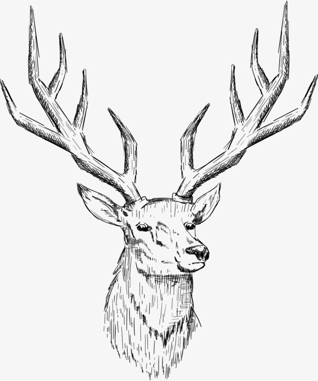 650x779 Sketch Deer Head, Nordic Deer Head, Deer Head, Northern Europe Png