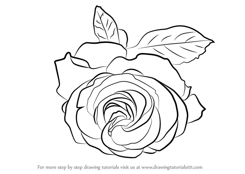 800x567 Learn How To Draw A Cherry Red Rose (Rose) Step By Step Drawing