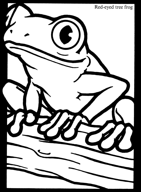 580x790 Frogs Stained Glass Coloring Book Dover Publications Stained