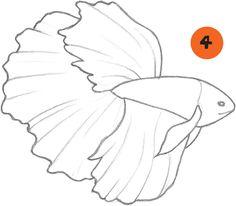 236x206 Betta Fish Drawing Images Betas And Goldfish Fish