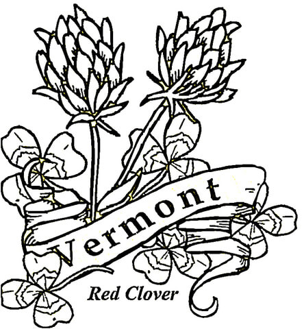 444x480 Vermont Flowers Coloring Page Free Printable Coloring Pages