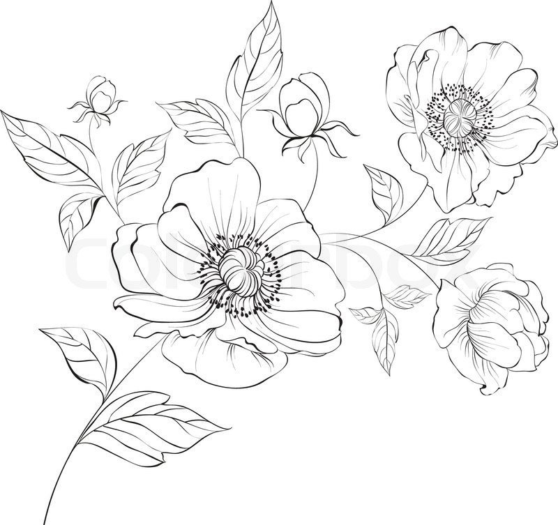 Red Flowers Drawing At Getdrawings Free For Personal Use Red