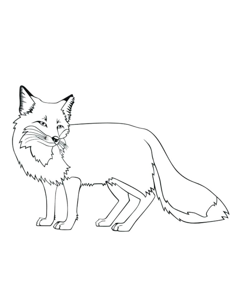 750x971 Red Fox Coloring Pages Adult Red Fox Coloring Pages Red E Fox