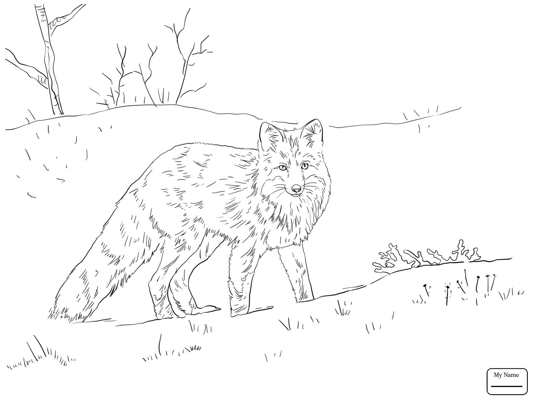 Red Fox Drawing at GetDrawings.com | Free for personal use Red Fox ...
