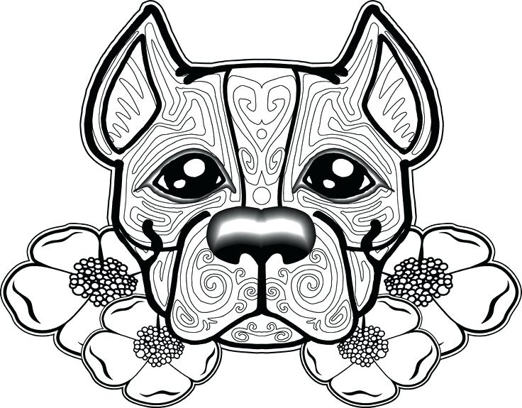 Red Nose Pitbull Drawing at GetDrawings   Free download