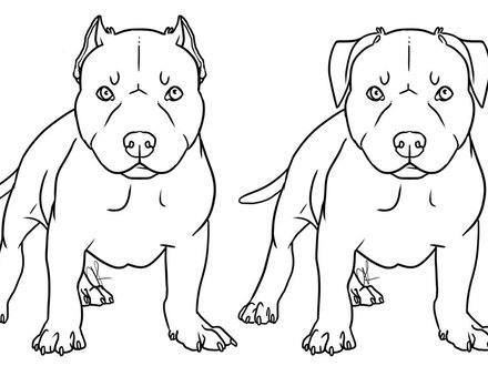 Red Nose Pitbull Drawing at GetDrawings com | Free for