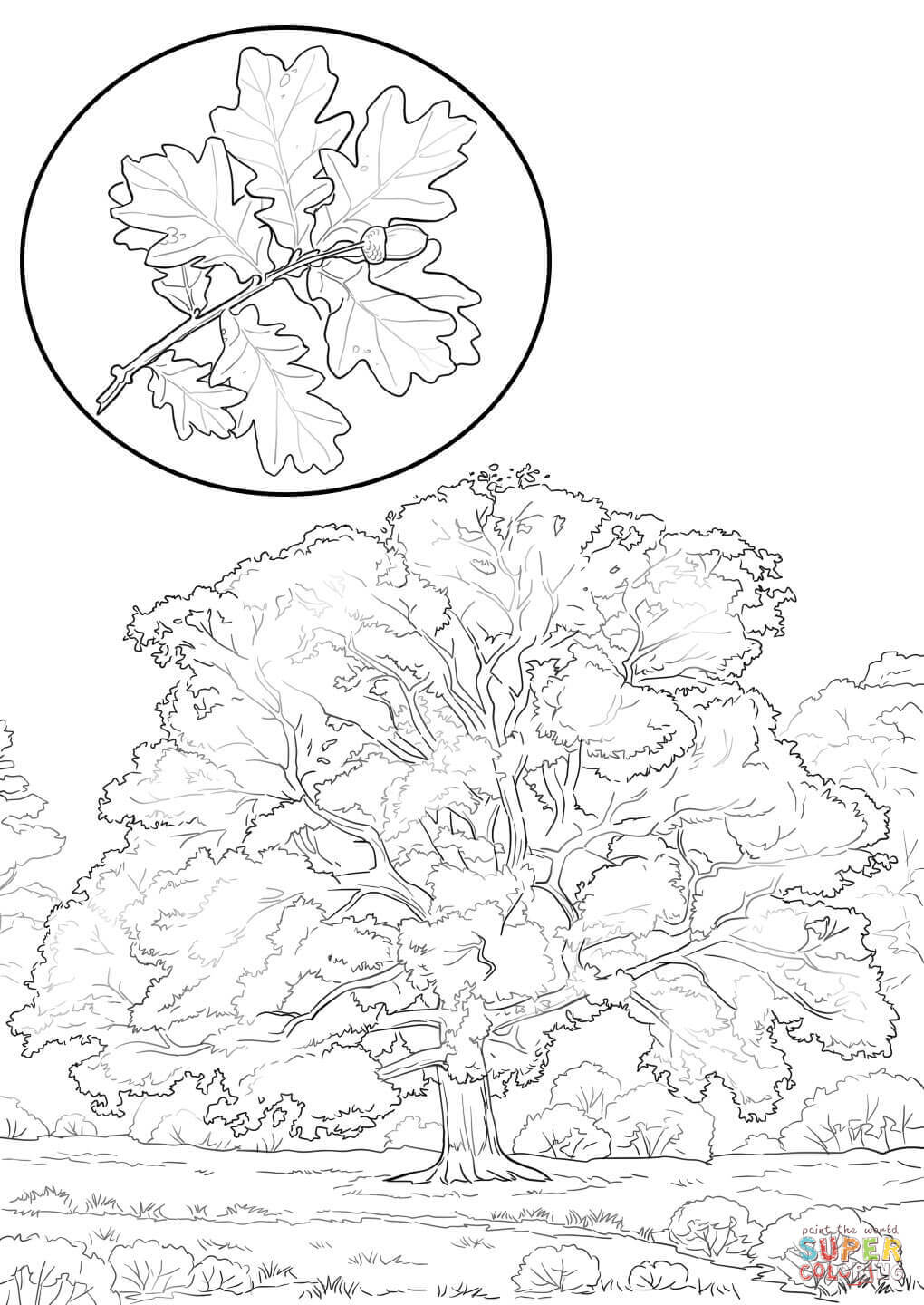 1020x1440 Northern Red Oak Coloring Page Free Printable Coloring Pages