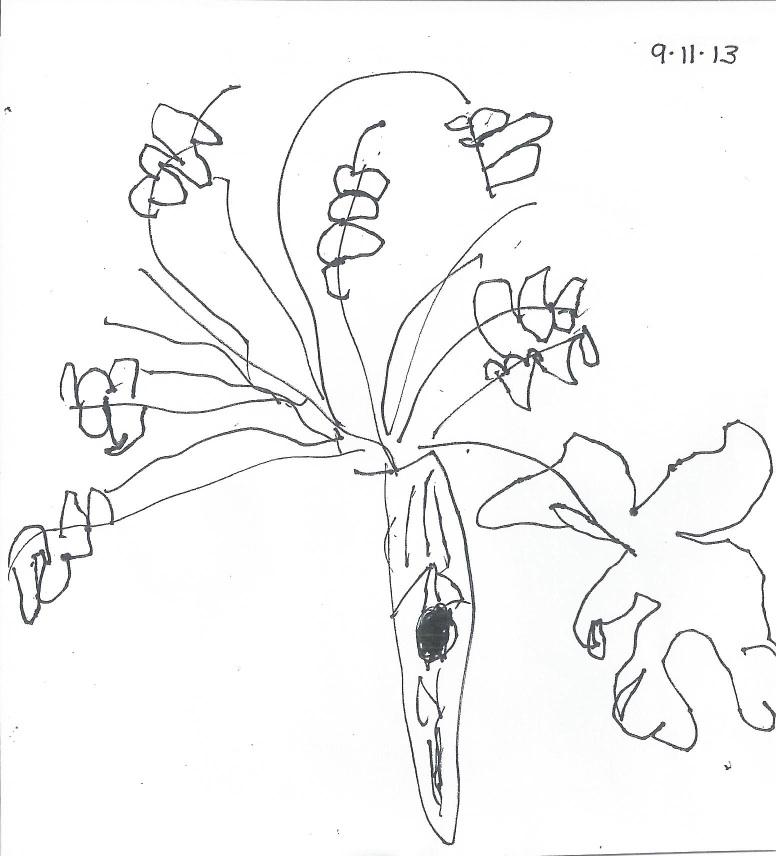 777x856 Sketching Mr. Red Oak Tree Early Childhood Lab School