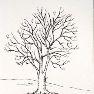 310x310 Tree Drawings