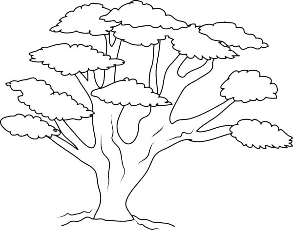 600x478 Oak Tree Coloring Page