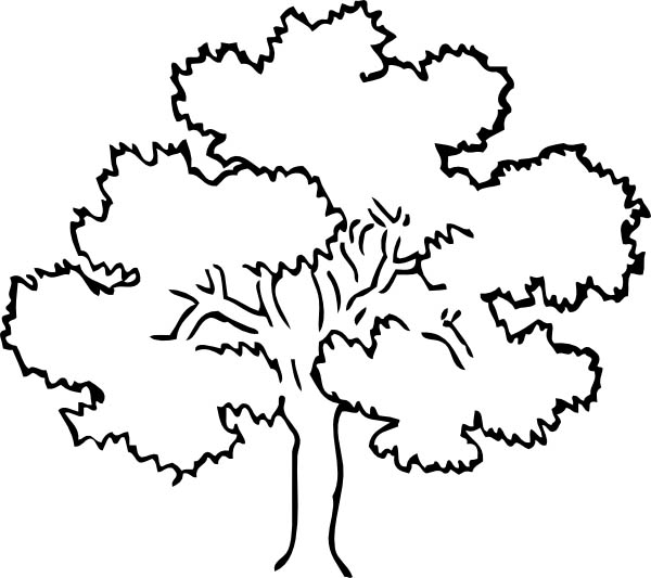 600x533 Awesome Drawing Oak Tree Coloring Page Color Luna