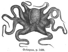 236x178 Classic Octopus With Anchor Tattoo On Right Half Sleeve Classic