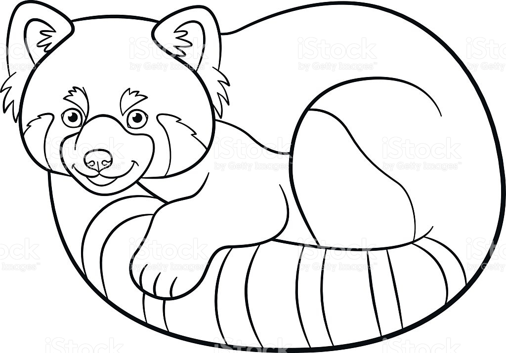 1024x715 Perfect Red Panda Coloring Pages 56 With Additional