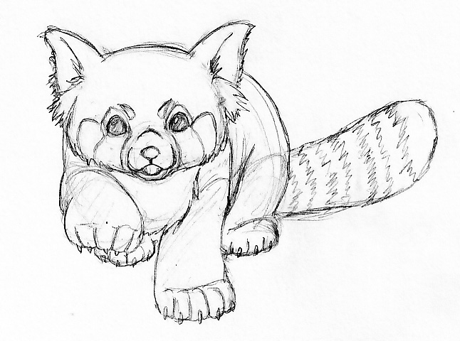 646x480 red panda just an example of position i want it in it tattoos i