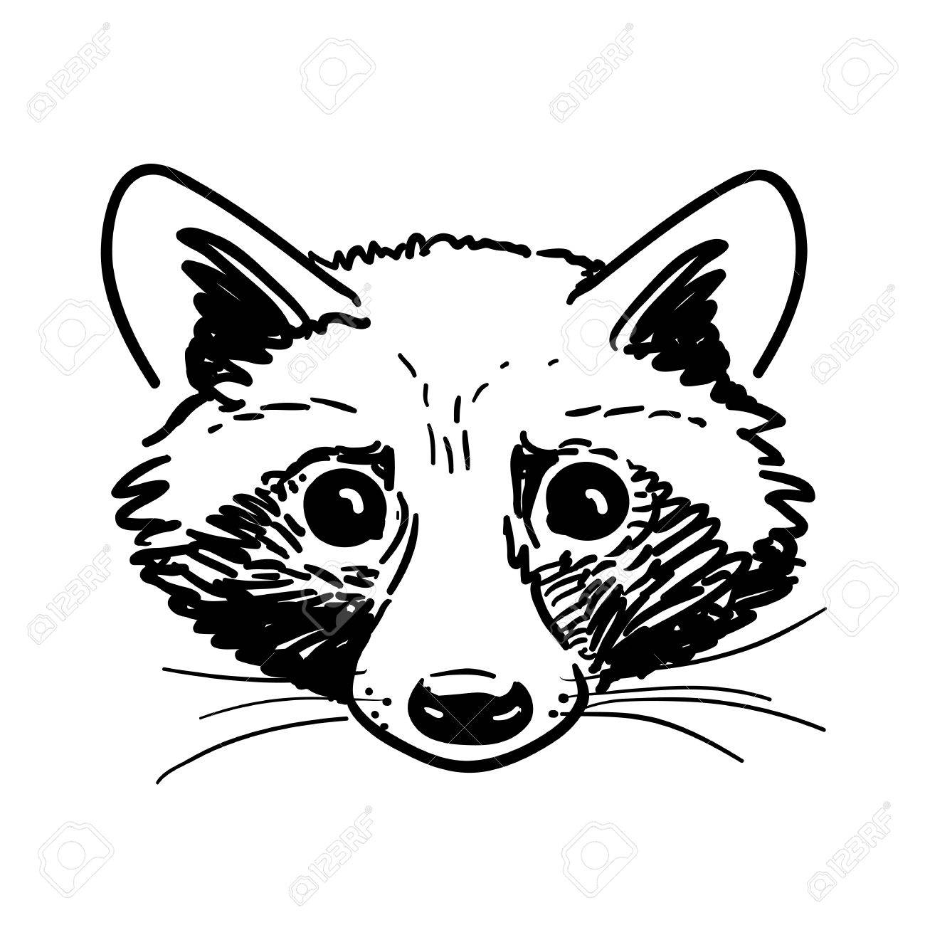 1300x1300 Vector Hand Drawn Pen And Ink Black And White Cute Raccoon Face