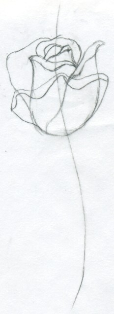 232x637 Draw A Rose Quickly, Simply And Easily