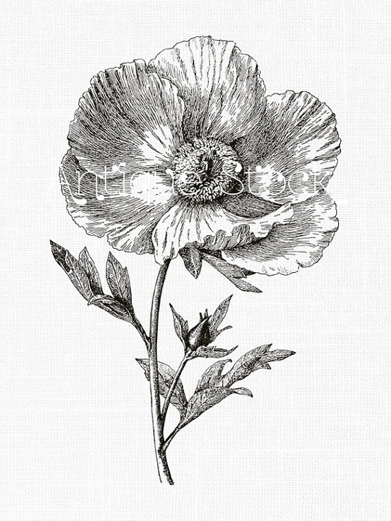 570x760 Flower Line Art Drawing