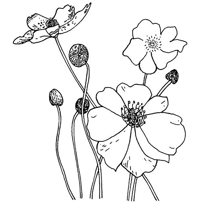 650x650 Penny Black Poppies Rubber Stamp Overstock Printable