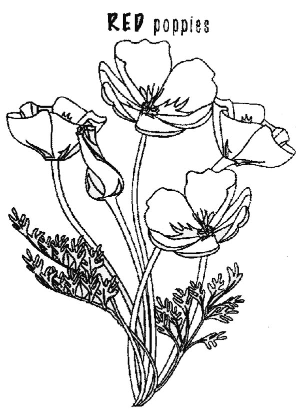 600x825 Poppy, Red Poppy Coloring Page Gumpast Anemone, Poppy