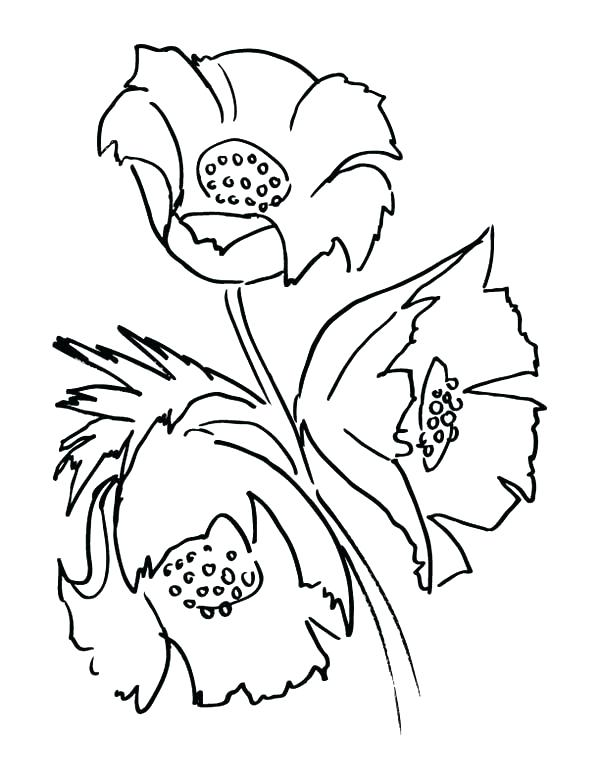 600x776 Poppy Coloring Page Poppy Flowers Coloring Page For Adult