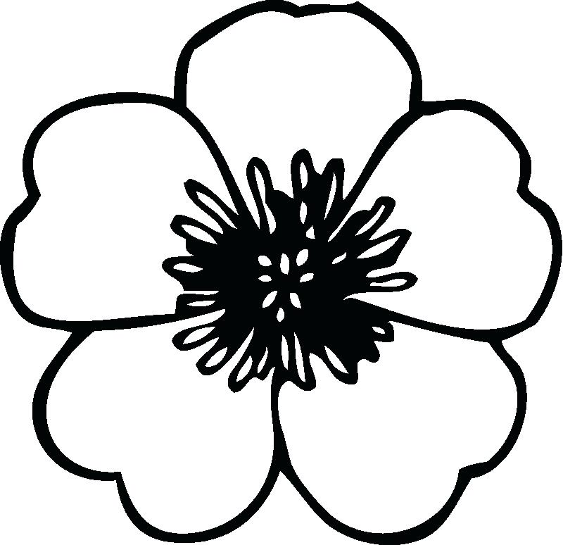 800x774 Poppy Coloring Page Poppy Picture Of Blooming Poppy Colouring Page