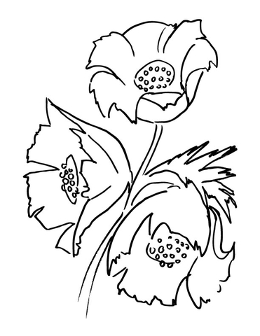 371x480 Poppy Flower Bouquet Coloring Page Prints To Color