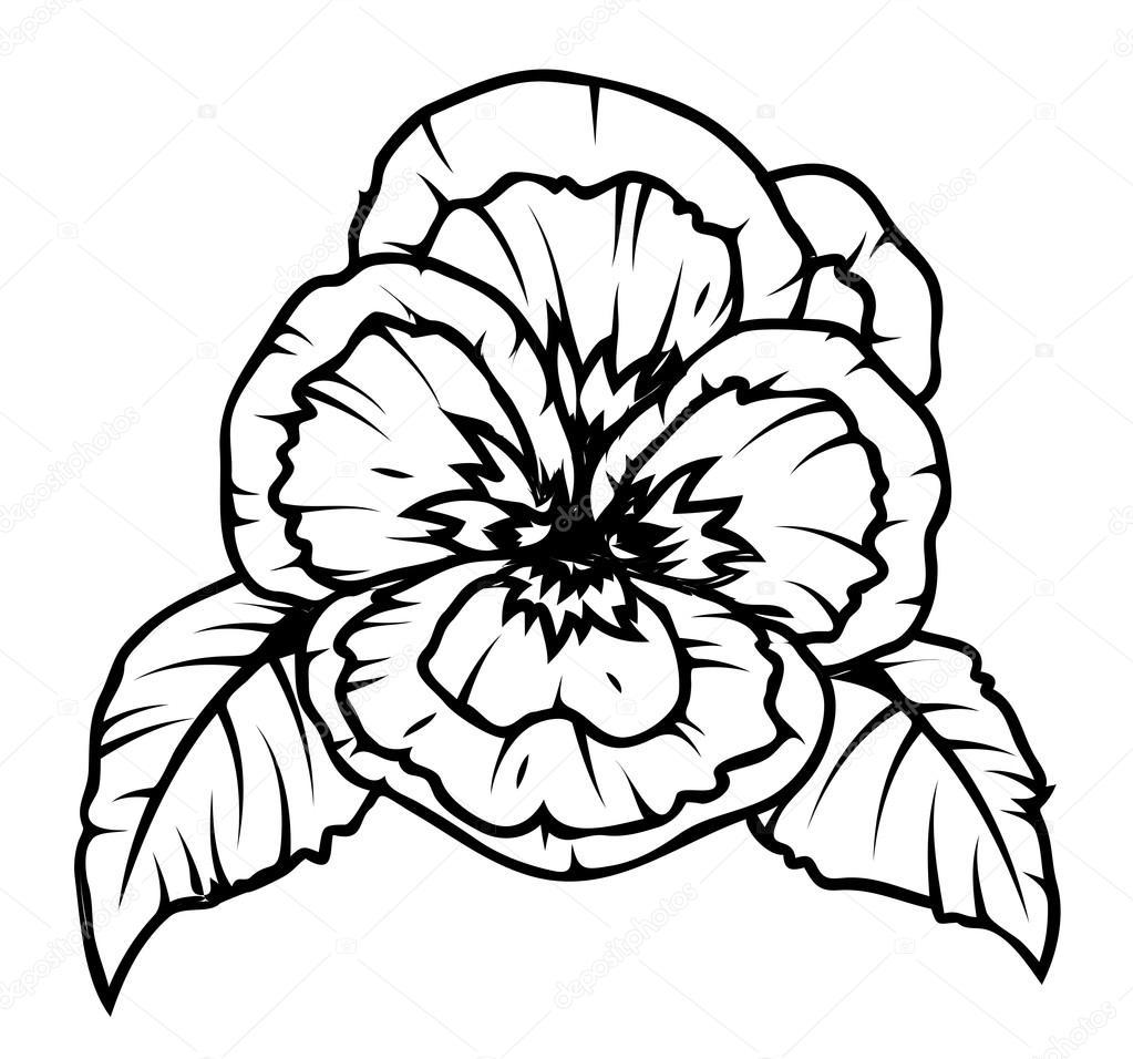1023x956 Poppy Flower Drawing Stock Vector Baavli