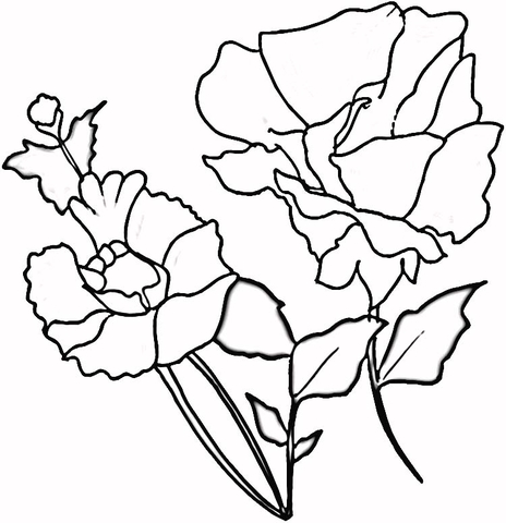 464x480 Red Poppies Coloring Page Free Printable Coloring Pages