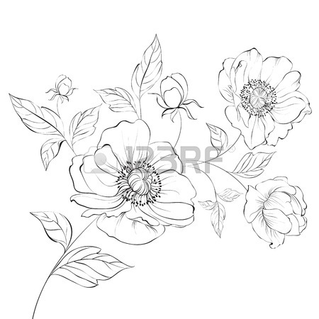 450x450 Red Poppy Flower Isolated On A White Background. Vector