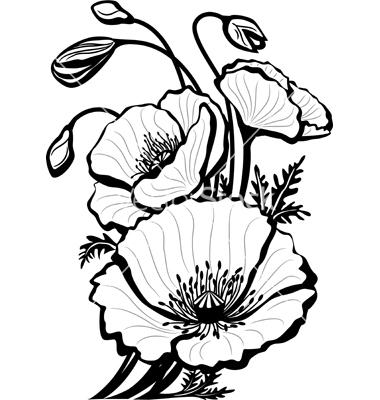 380x400 Sketch Of Poppy Flowers Vector By Wikki33